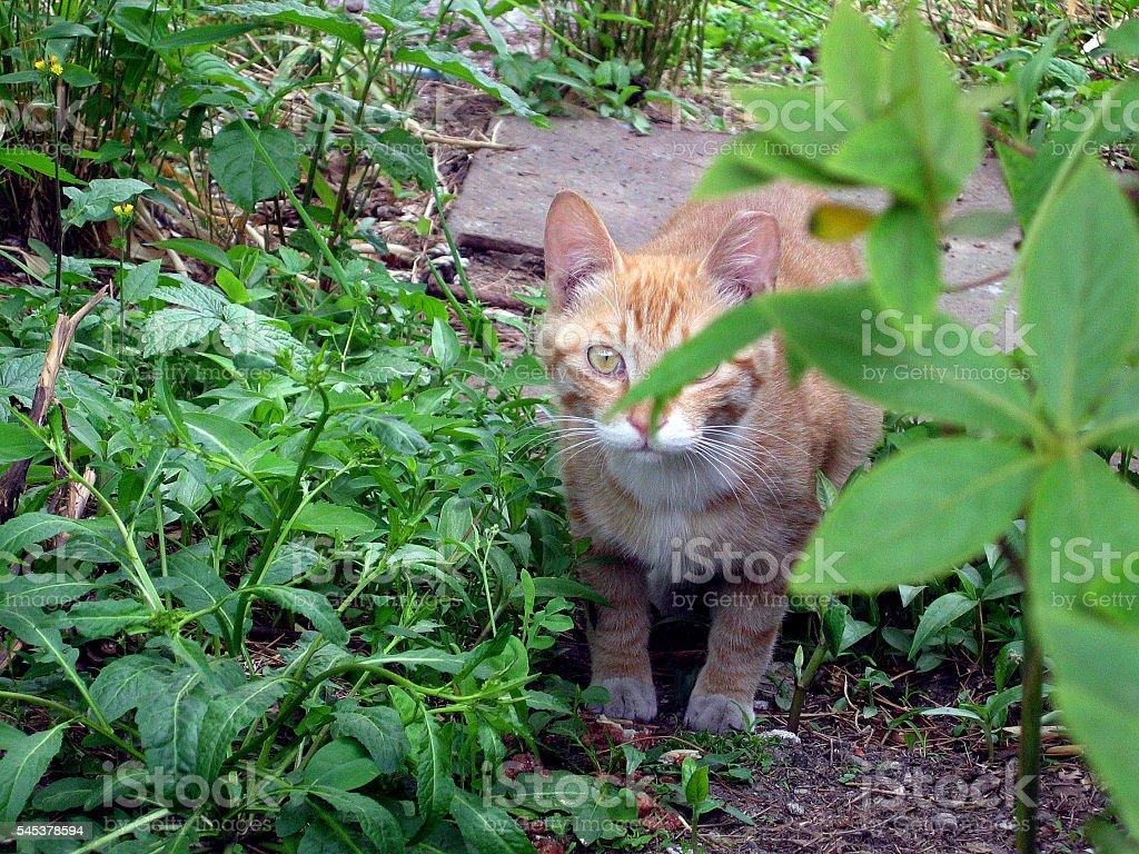 cats - storyteller 10 stock photo