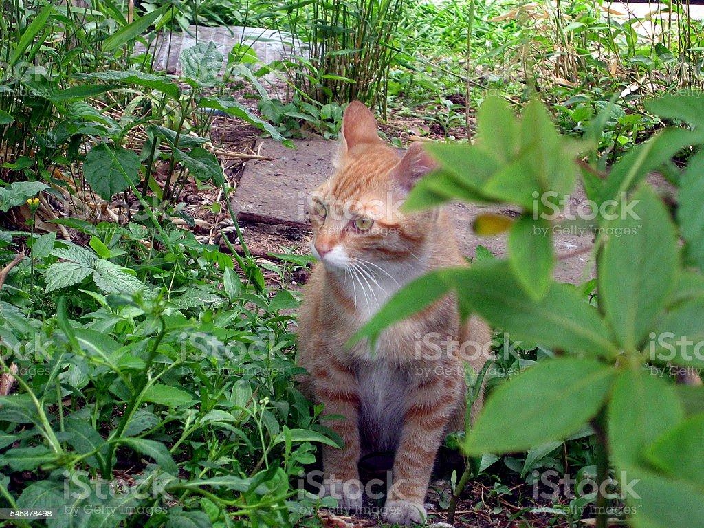 cats - storyteller 11 stock photo