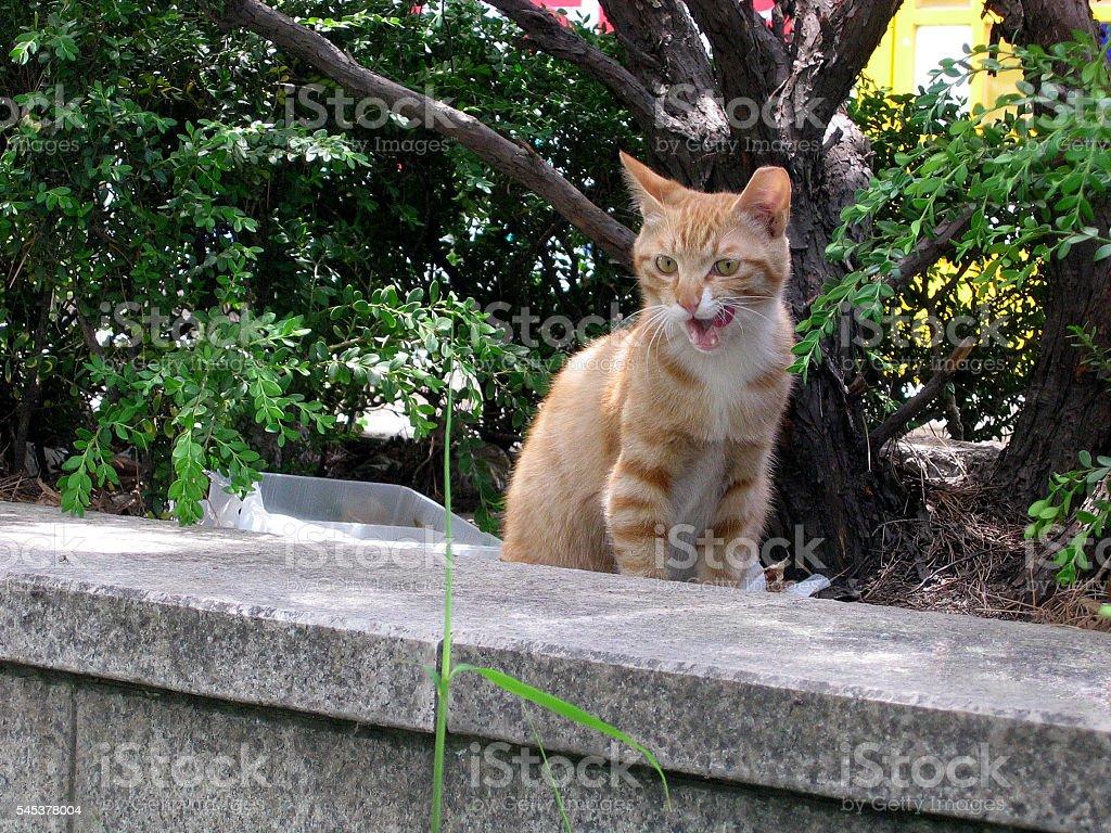 cats - storyteller 14 stock photo