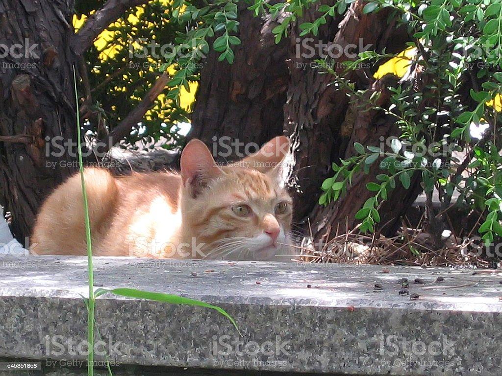 cats - storyteller 15 stock photo