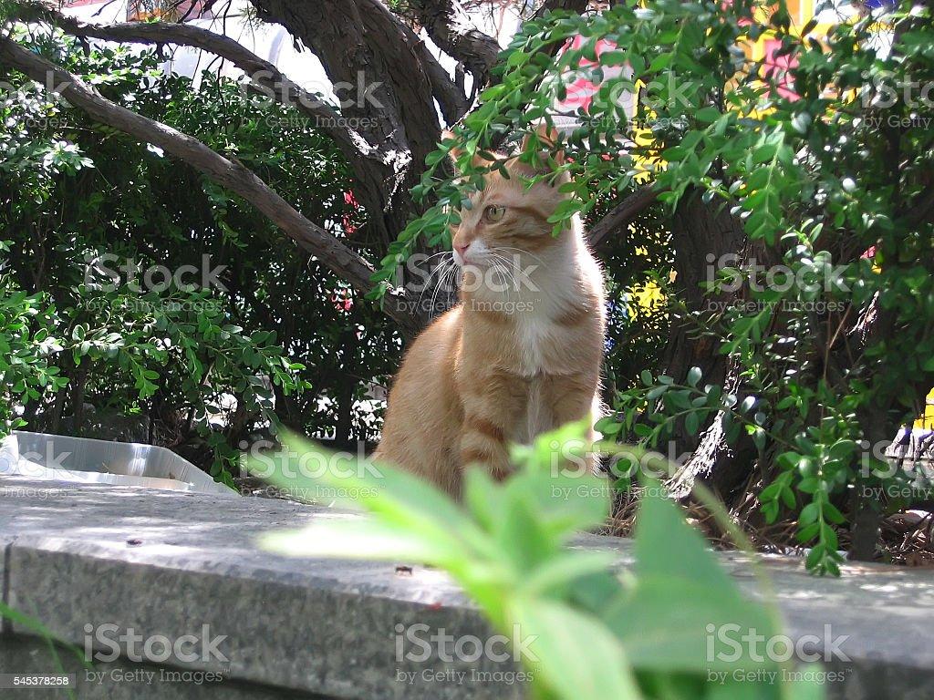 cats - storyteller stock photo