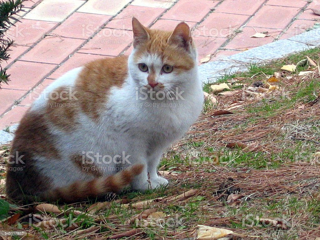 cats -storyteller-06 stock photo