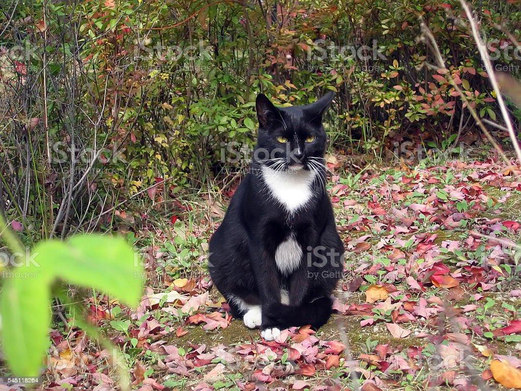 cats -storyteller-07 stock photo