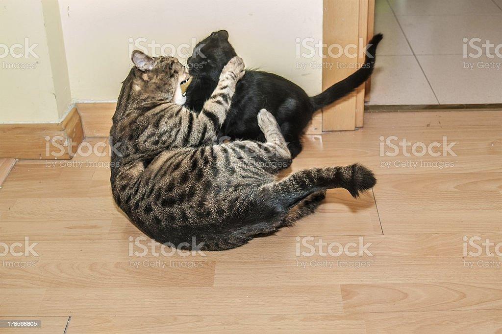 Cats struggling stock photo