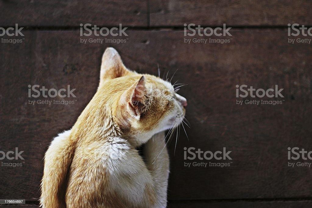 Cat cama sweet Dreams foto de stock libre de derechos