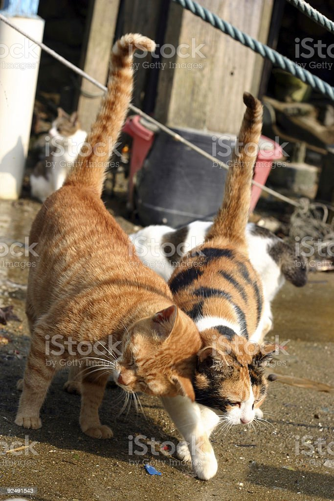 cats together royalty-free stock photo