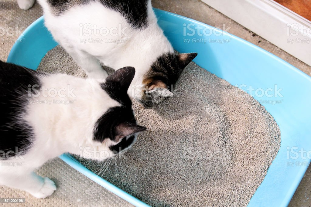 Cats using toilet, cats in litter box, for pooping or urinate, pooping in clean sand toilet. A cats looking at her own poop in blue litter box. Pet shop. Cleaning litter box. Cats at balcony. stock photo