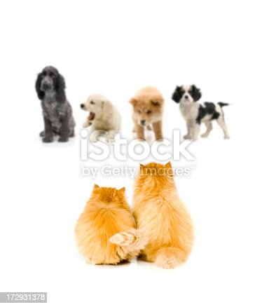 baby cats and dogs