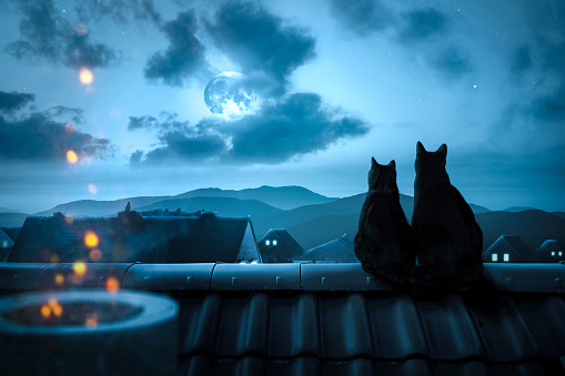 Cats watching the full moon on a rooftop