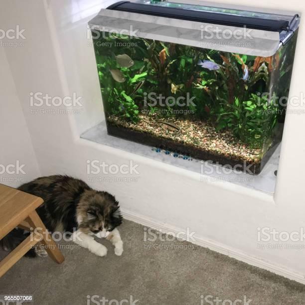 Cats zen corner picture id955507066?b=1&k=6&m=955507066&s=612x612&h=nptiopyezz 9n2dqo2xgo7g zjxlumr9nfxyxb5pye8=