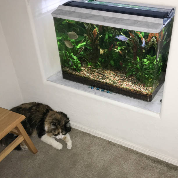 cats zen corner - home aquarium stock pictures, royalty-free photos & images
