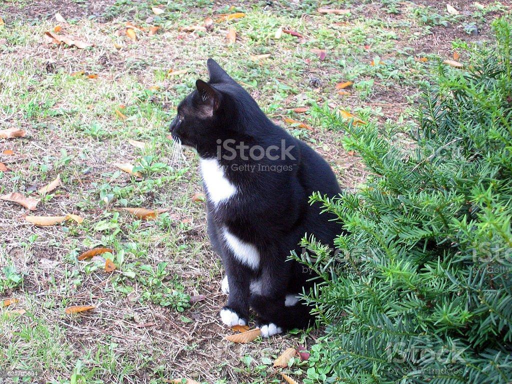 cats-01 stock photo
