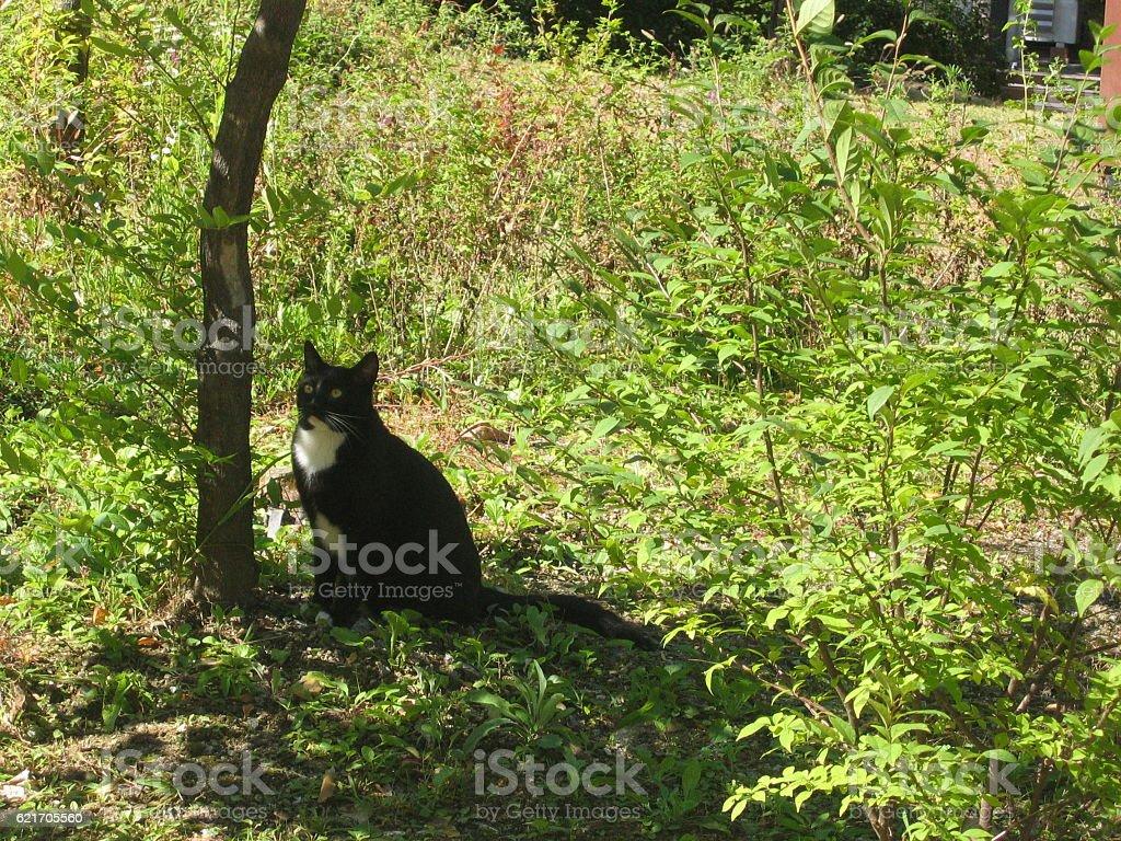 cats-02 stock photo