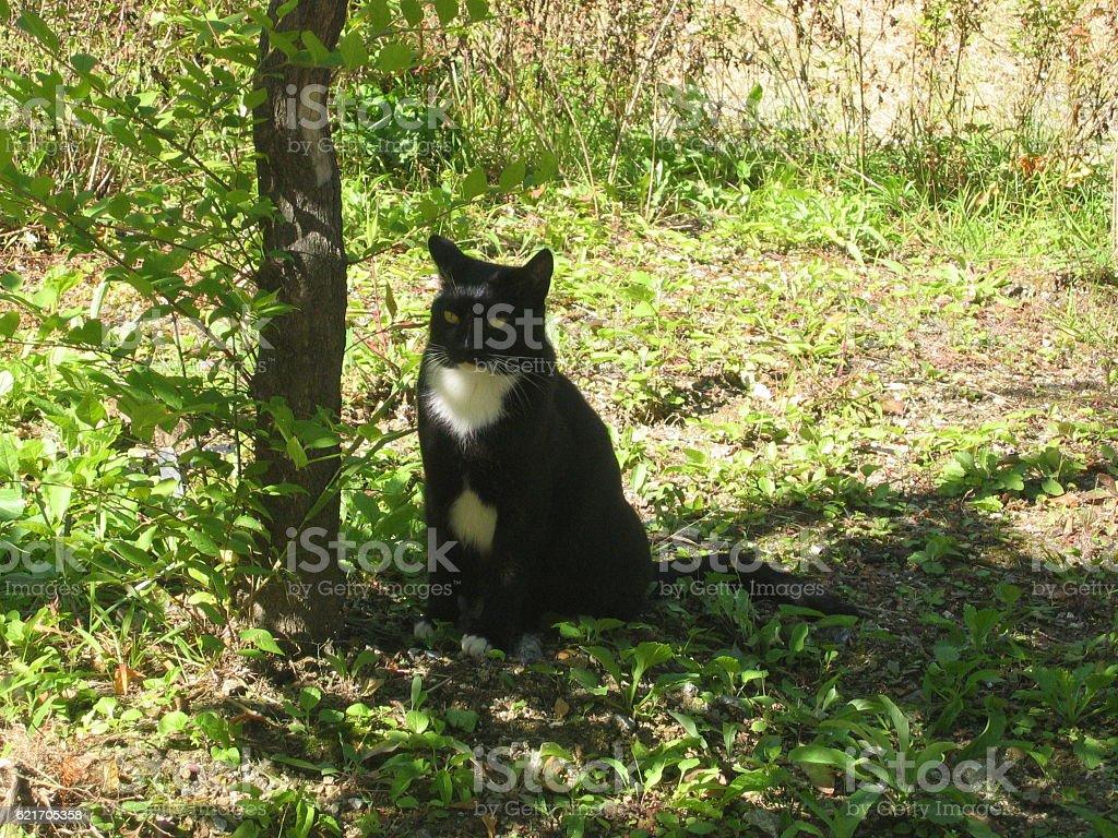 cats-03 stock photo