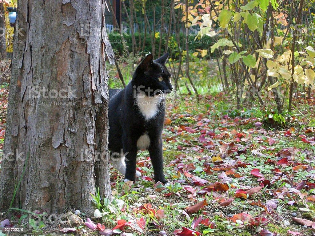 cats-04 stock photo