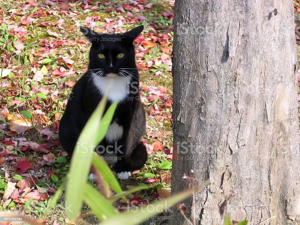 cats-09 stock photo