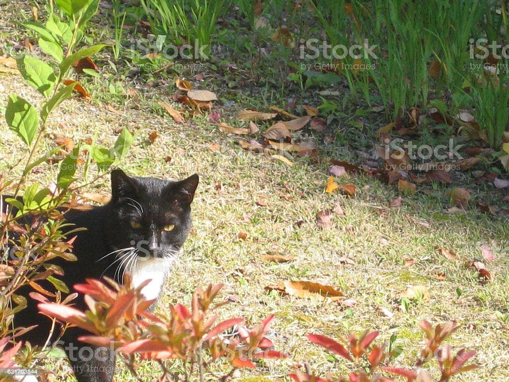 cats-11 stock photo