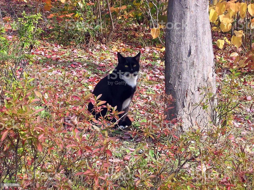 cats-12 stock photo