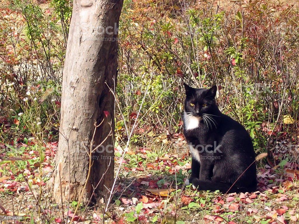 cats-13 stock photo