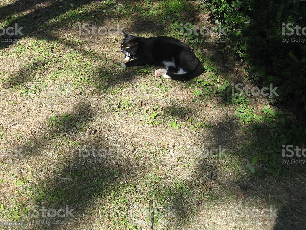 cats-17 stock photo