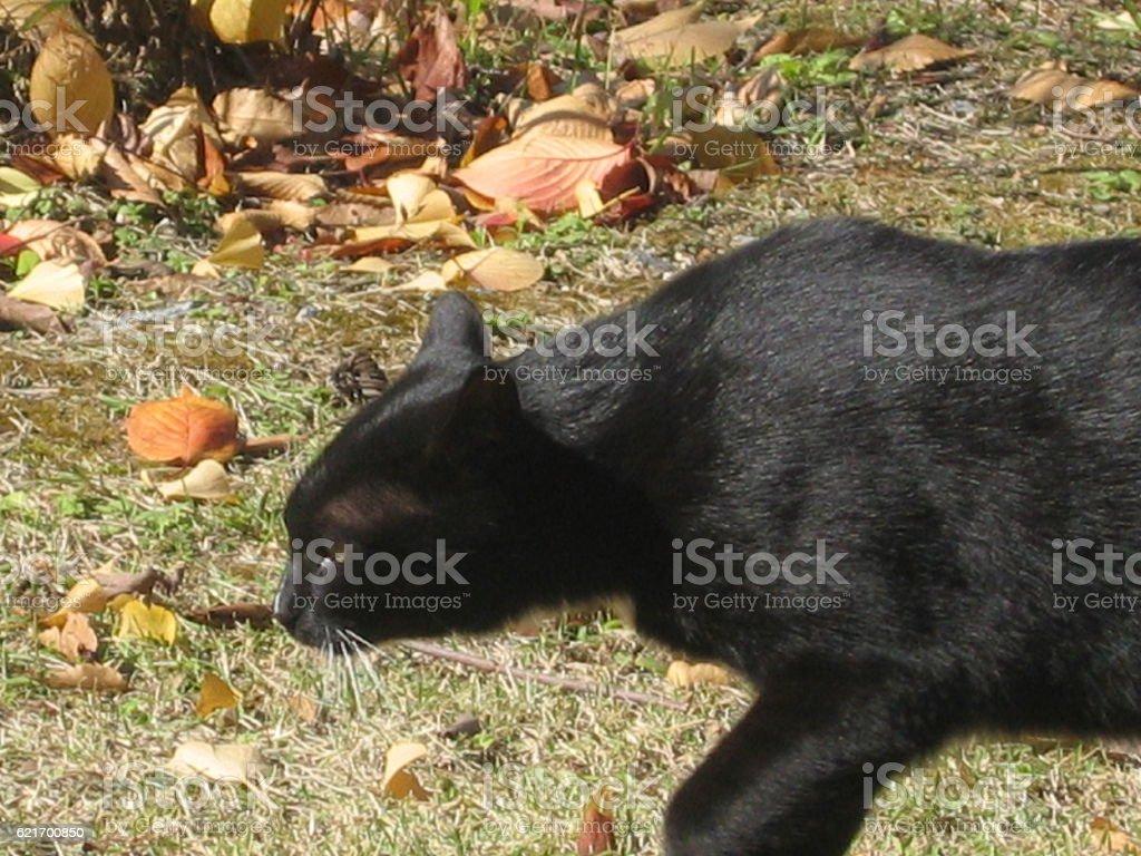cats-19 stock photo