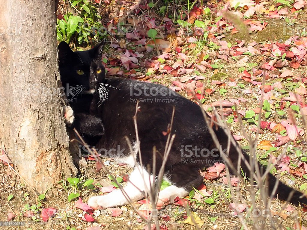 cats-20 stock photo