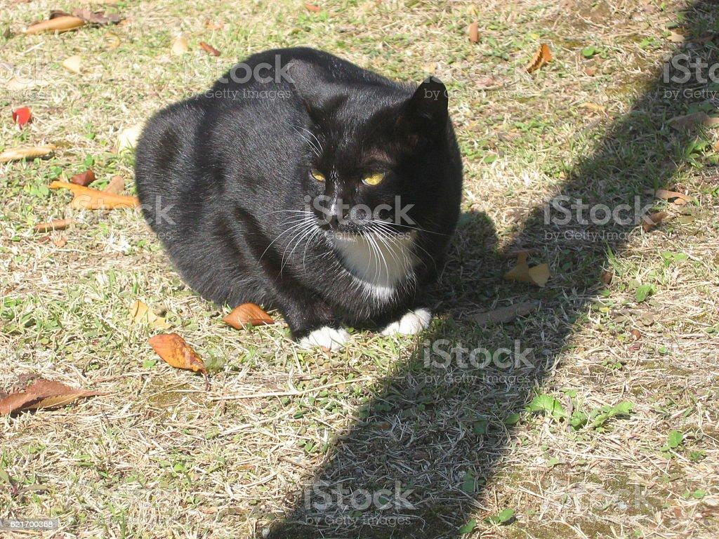 cats-21 stock photo