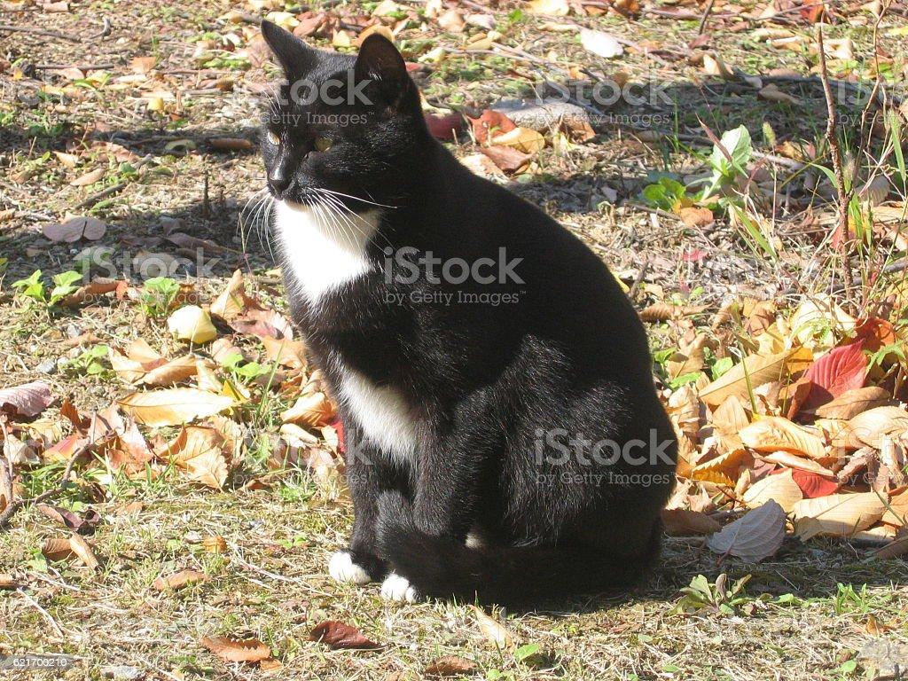 cats-22 stock photo