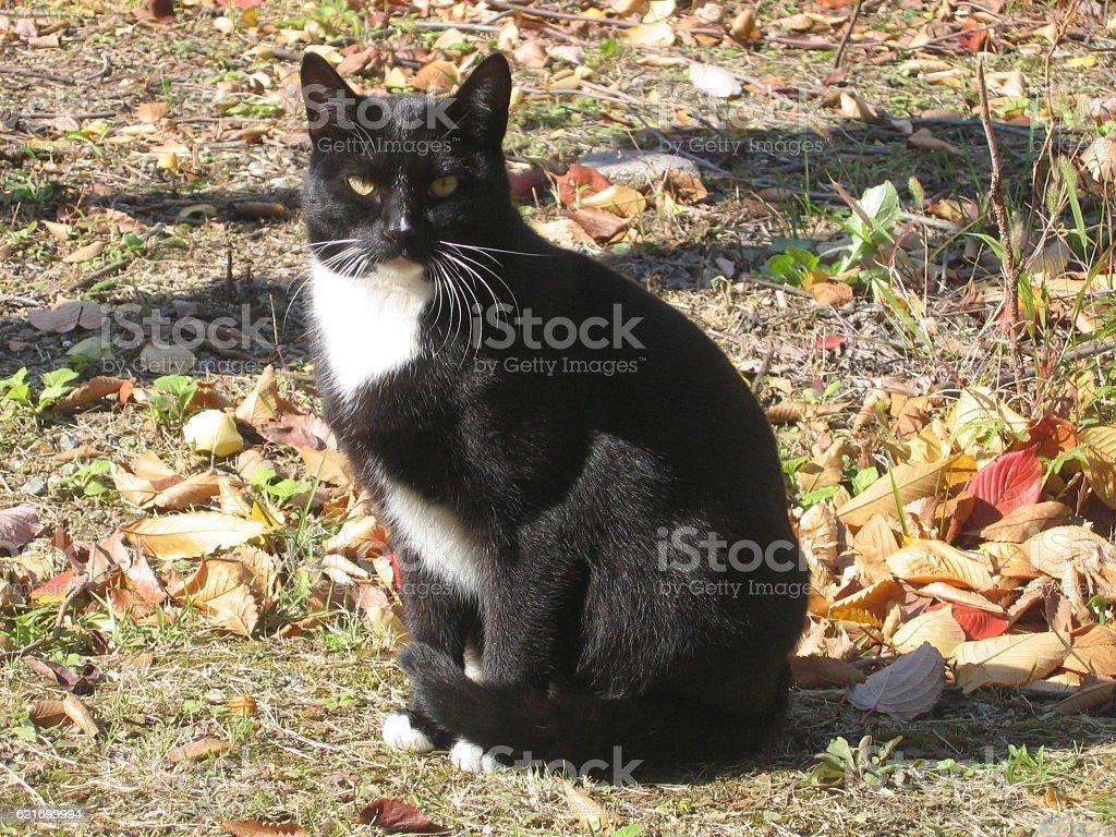 cats-23 stock photo