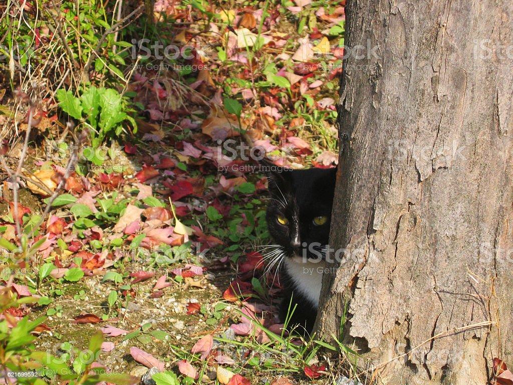 cats-25 stock photo