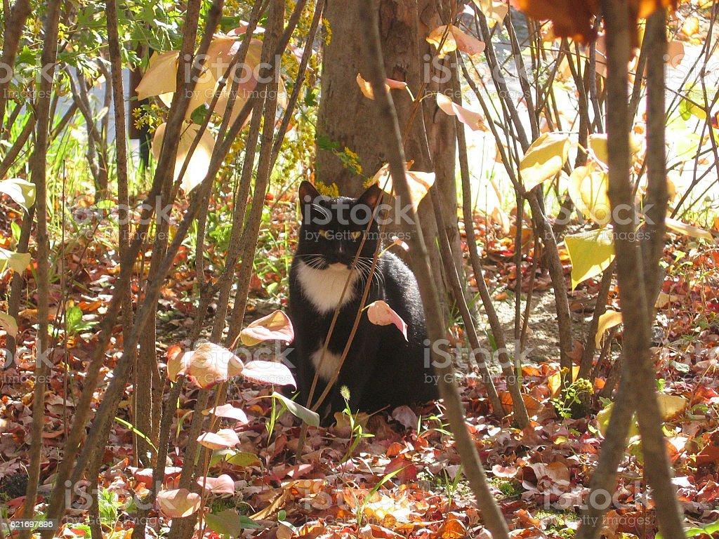 cats-27 stock photo