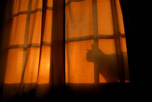 Catshadow picture id147689339?b=1&k=6&m=147689339&s=612x612&w=0&h=qkna0a1zwxdhjjv1ewl1j29jubtwoot6orjyqnnl4qo=