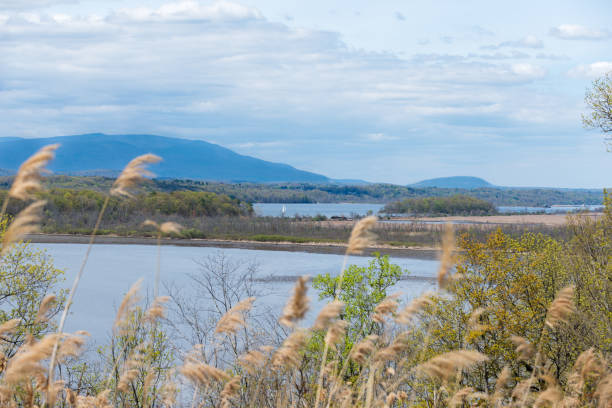Catskill Mountain View across the Hudson River, Upstate NY. View of Catskill Mountains and Hudson River near Rhinebeck, NY. Soft focus Reeds in the foreground with a Dramatic Sky, and Sailboat on the river. albany county new york state stock pictures, royalty-free photos & images