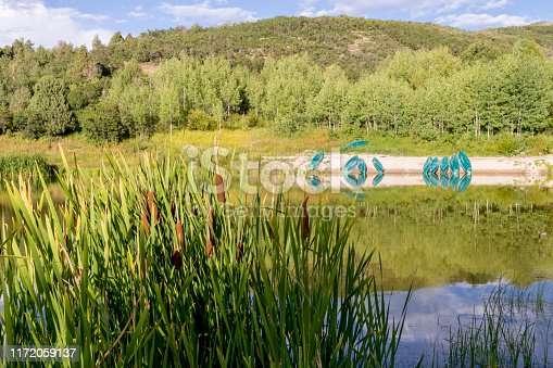 These cattails are growing in front of a small mountain lake in Utah.  In the background is a collection of green plastic canoes. This shot was taken in the evening of late summer.
