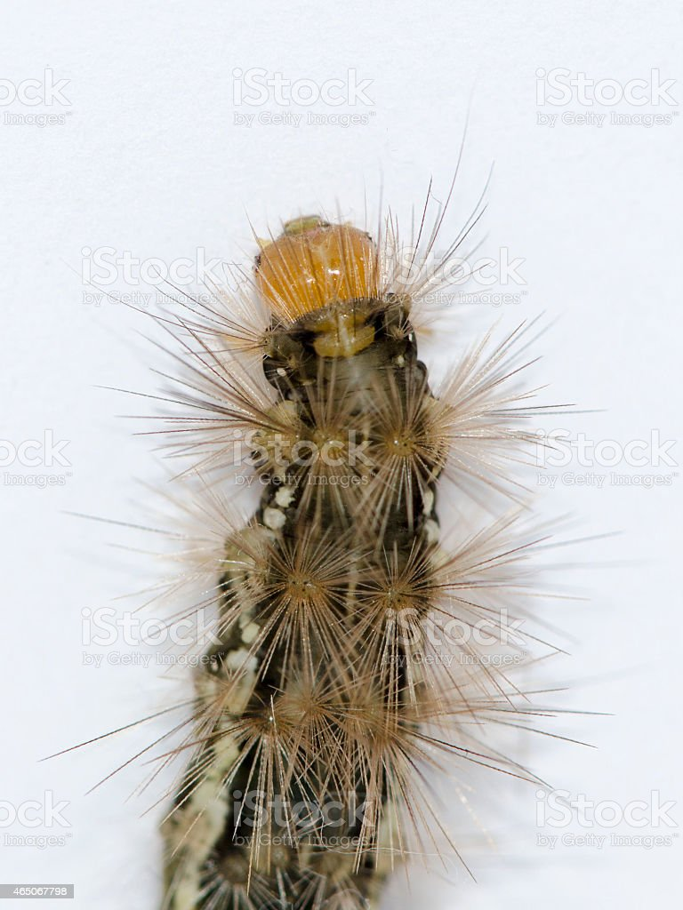 Catterpillar Close up stock photo