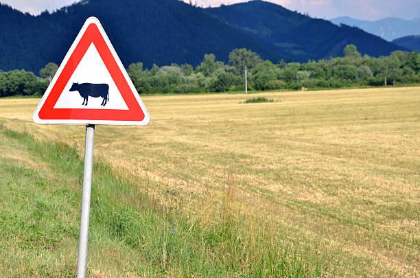 Cattle crossing traffic sign next to empty field. - foto de stock