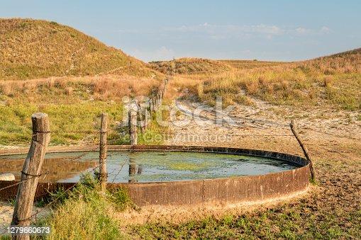 cattle drinking hole in a prairie of Nebraska Sandhills - fall morning scenery at Nebraska National Forest