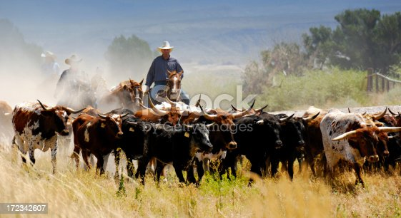 Central Man Driving Cattle On Mountain Backdrop.  Three other cowboys/cowgirl obscured by trail dust.