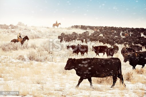 Cows, Cowboys and desert.  Moving the herd to the winter feed lots.  Frosty crystallized flakes of snow blowing around in the air.  Sagebrush and a bizzilion Angus cows.