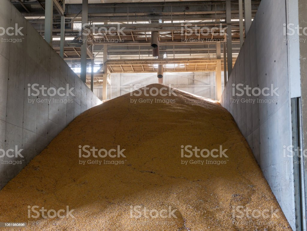 Cattle Feed In Storage Stock Photo - Download Image Now - iStock