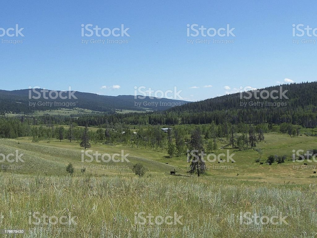 Cattle in the ranch lands royalty-free stock photo