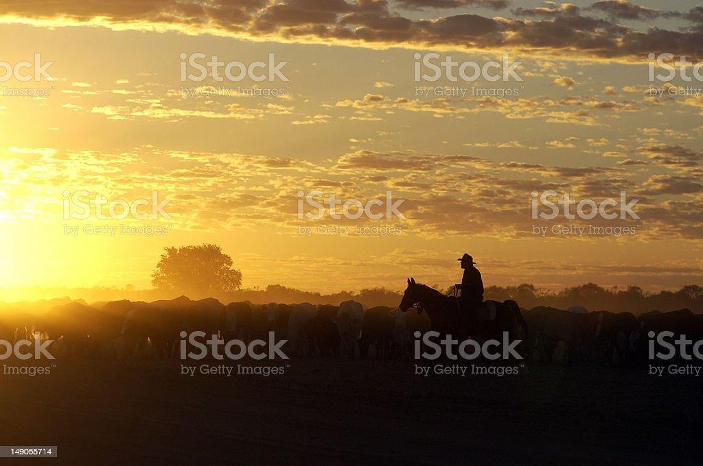 cattle muster at Birdsville ,Queensland stock photo