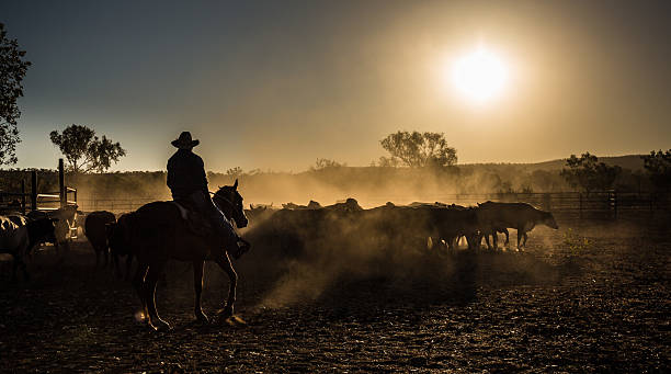 cattle mustering, Kimberley, Western Australia outback stock pictures, royalty-free photos & images