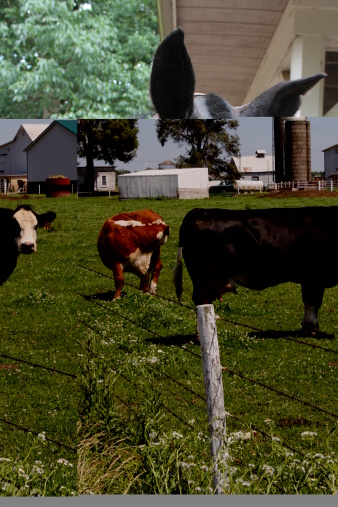 Cattle On A Farm Stock Photo - Download Image Now