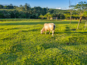 Photo of a pasture with a cattle.
