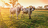 Photo of a pasture with some cattle.