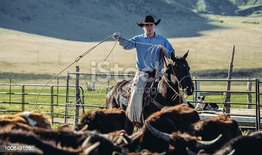 Cowboy on his horse roping the cattle in the coral on open landscape of Utah, USA.