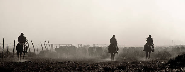 Cattle Round Up Western, Rugged, Cattle, Round Up, Cowboys, Horse Back, Dusty, Silhouette, Herding, Ranchers, Wranglers herding stock pictures, royalty-free photos & images