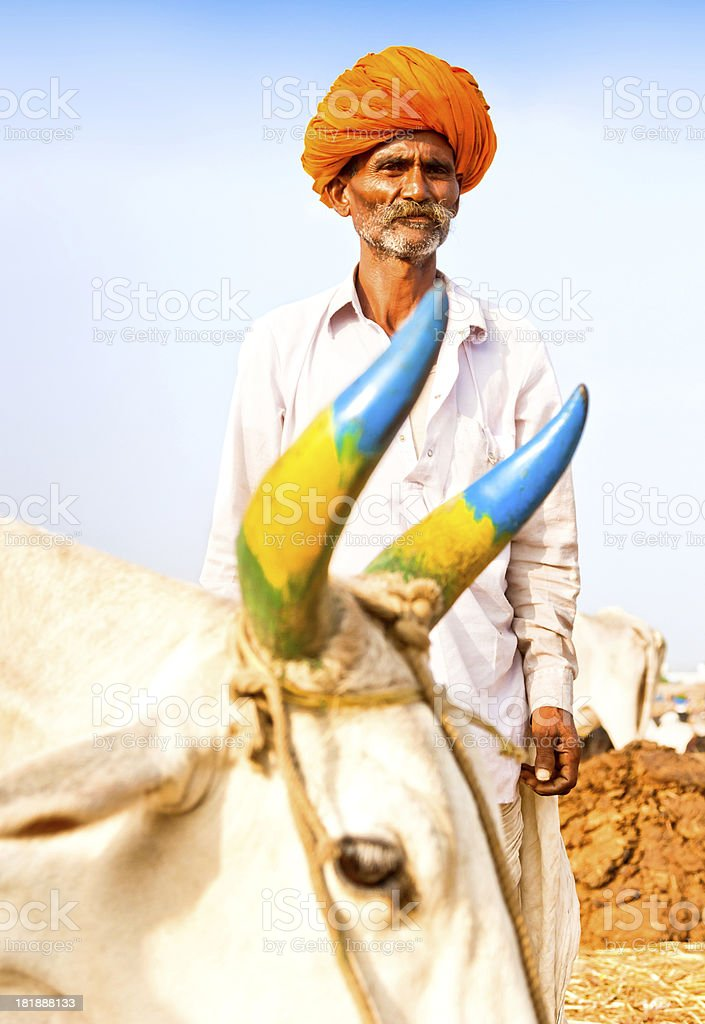 Cattle Seller in India royalty-free stock photo