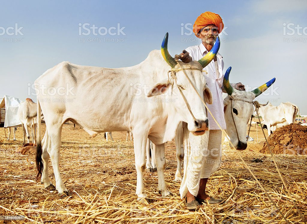 Cattle Seller in India stock photo